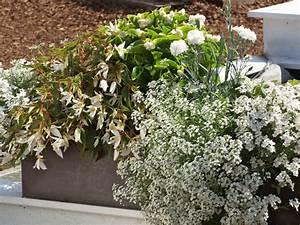 pflanzen fur den balkon in weiss With französischer balkon mit pflegeleichte pflanzen für den garten