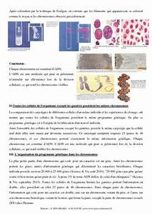 Devoir Maison Svt 3eme Chromosomes  U2013 Ventana Blog