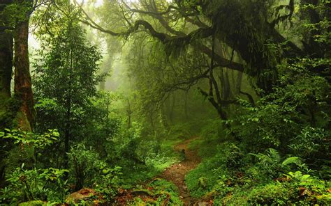 jungle background   beautiful hd wallpapers