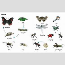 #insects In #english, Your Skype School  Vocabulary Pinterest