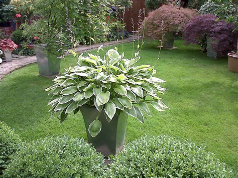 plants for garden potted plants in a beautiful garden garden caine and son