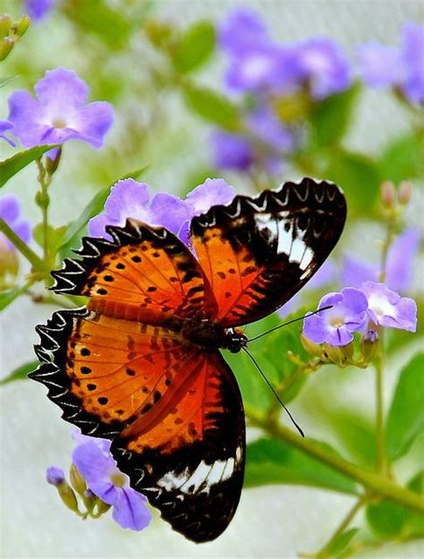 what colors are best for a bedroom 229 best adorable butterflies images on pinterest 21192 | 46333bbd2528dd8f5094c36a21192c21 flutterbye butterfly wings