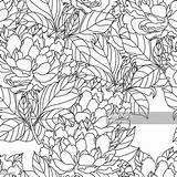Coloring Peony Adults Bouquet Vector Colorare Seamless Mano Disegnato Adulti Mazzo Illustrativo Materiale Peonia Vettore Libro Gli Pagina Della Artwork sketch template
