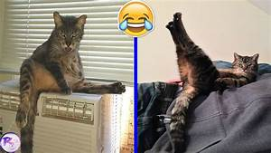 Funny Pictures Of Cats Acting Weird! - YouTube  Funny