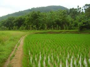 Paddy fields A Quest on Overdrive :)