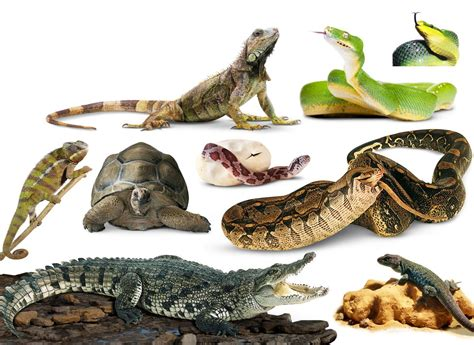 NATURE ASSOCIATION REPTILE DEMONSTRATION ARE YOU BRAVE