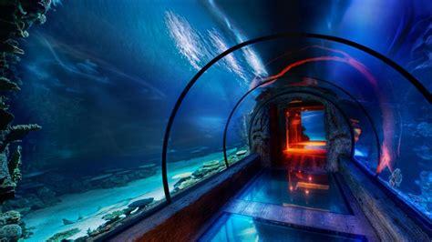 aquarium hd p wallpaper wallpapersafari