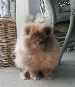 Can You Show Picture of Bunny Rabbits