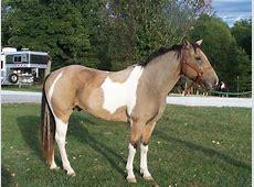 صور خلفيات خيول عربية اصيلة واجمل احصنة في العالم HD