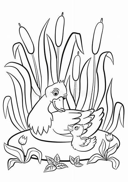 Pond Duck Duckling Coloring Swim Smile Kind