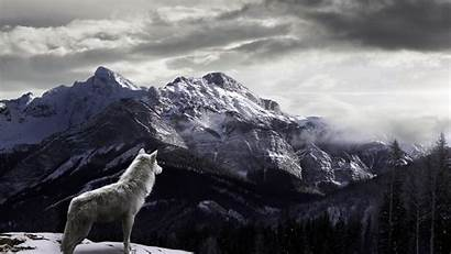 Wild Wolf Mountain Wallpapers Chase Backgrounds Nature