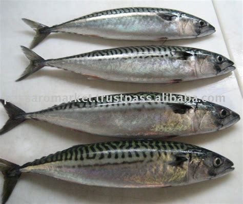 salmon fish productsindia salmon fish supplier