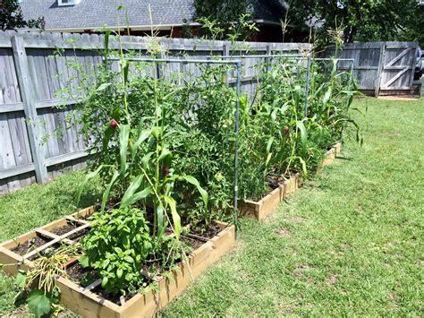 early start  spring veggies gardening
