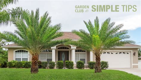 embrace the tropics plant palm trees now garden club