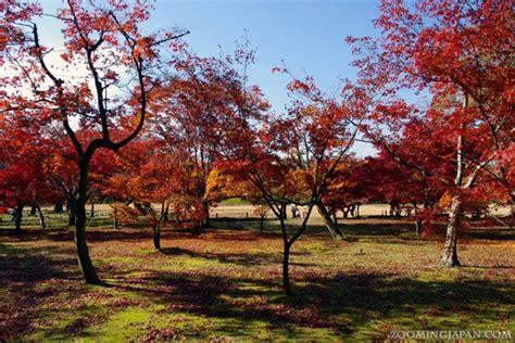 images  japan parks  gardens
