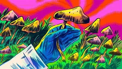 Mushroom Mushrooms Psychedelics Medicine Statnews Magic Evangelist