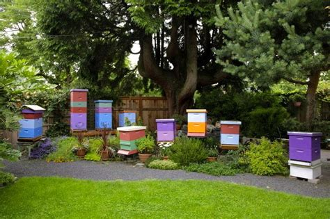 Backyard Honey Bee Hive by 207 Best Bee Info Images On Bees Honey Bees
