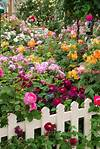 12529 best images about flowers and gardens on Pinterest beautiful flower gardens pinterest