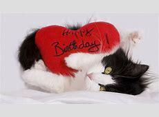 Happy Birthday Foto & Bild tiere, haustiere, katzen