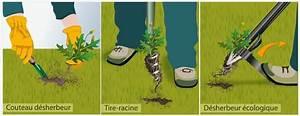 Comment Enlever Les Mauvaises Herbes : liminer les mauvaises herbes racine pivotante jardinage ~ Melissatoandfro.com Idées de Décoration