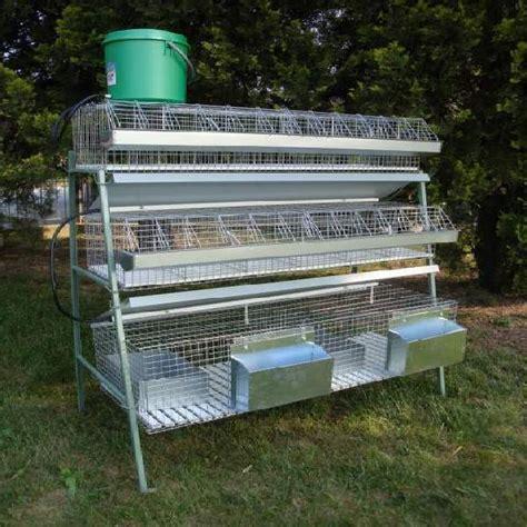 gabbie usate per conigli conigli ingrasso animali ottobre clasf