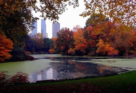 fall  central park  york style motivation