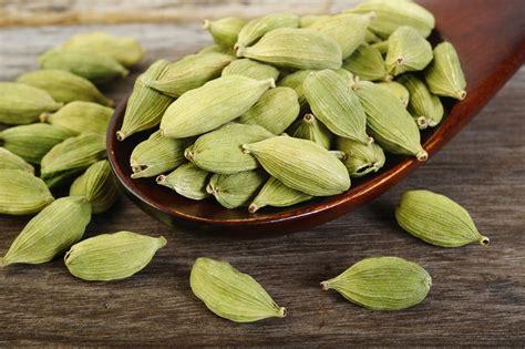 green cardamom health benefits of elaichi small cardamom manddoveda