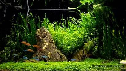 Fish Tetra Neon Plants Aquatic Types Aquarium