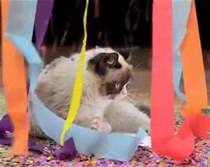 Happy Birthday GIF by Internet Cat Video Festival - Find ...