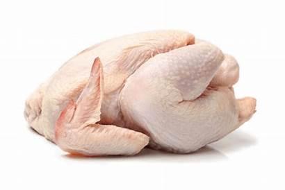 Chicken Meat Raw Skin Ferret Neck Diet