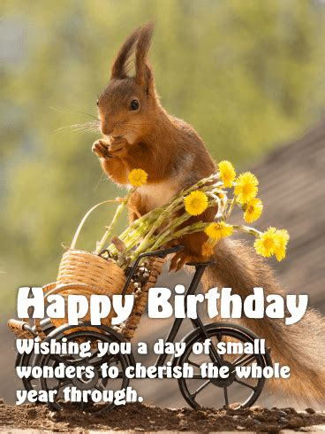 sweet squirrel happy birthday card birthday greeting