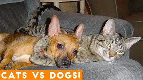funniest dogs  cats compilation  funny pet