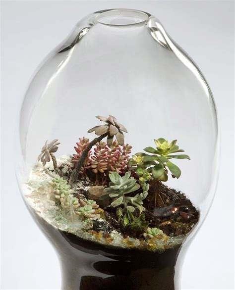 blown terrarium handblown glass terrariums by paula hayes oen