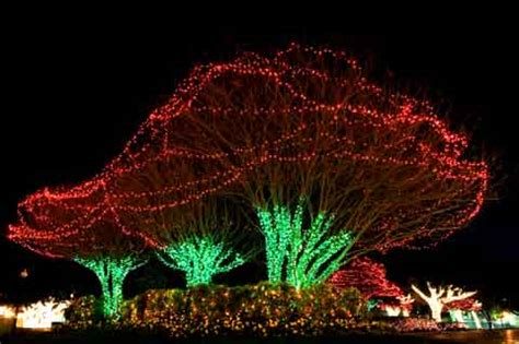 best place to buy led christmas lights easy outdoor christmas lights 15 great sources of