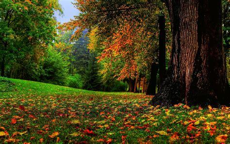 nature fall landscape trees wallpapers hd desktop  mobile backgrounds