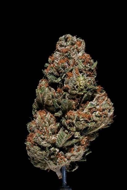 Weed Gifs Cannabis 420 Marijuana Related Animated