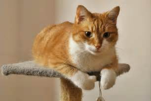 orange cats orange cat cat of my friend name cynamon one isn