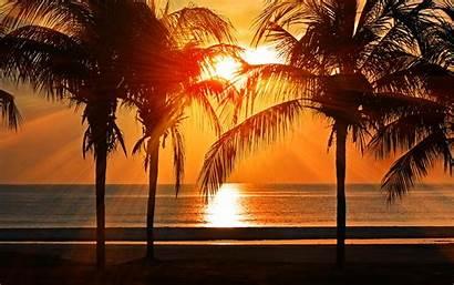 Summer Sunset Beach Palm Night Vacation Tree