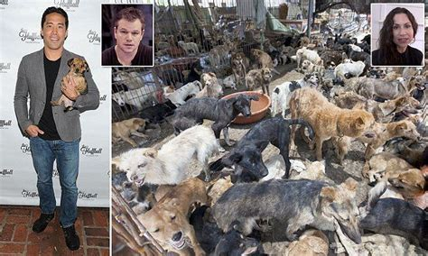 dogs  hollywood crusader vowed  rescue  china