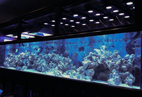 Vivid Aquariums using 800 gallon display for a large scale comparison of LED and metal halides