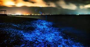A Guide To Puerto Rico39s Magical Glow In The Dark Beaches