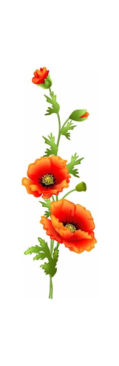 Poppy Clipart Poppies Flower Flowers Orange Clip
