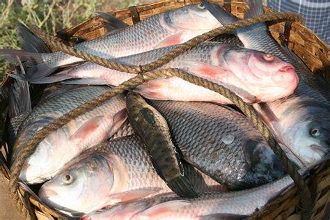 fishing south india lakesideindia