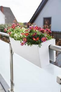 Künstliche Blumen Für Balkonkästen : balkonkasten blumenkasten fiberglas balkona classic 60 ~ A.2002-acura-tl-radio.info Haus und Dekorationen