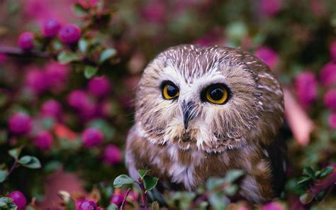 Owl Wallpapers by Owl Hd Wallpaper Background Image 2560x1600 Id
