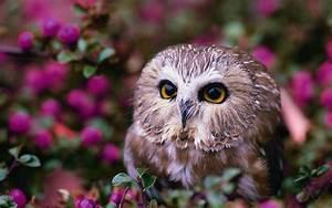 Owl Computer Wallpapers, Desktop Backgrounds