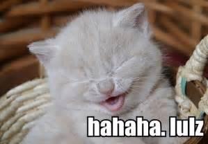 cat jokes for album hahaha lulz