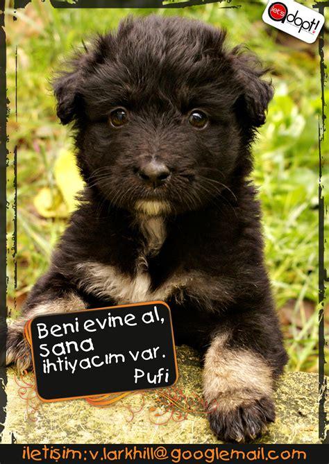 boll Pufi_TRII - Lets Adopt! Global