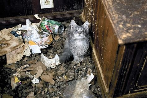 hoarding cats adoption event set for cats from hoarding situation in