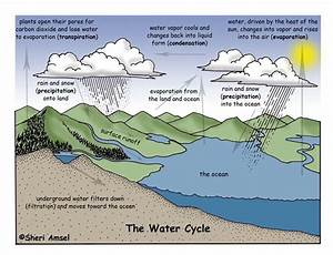 Sunnyland 4th Grade   The Water Cycle